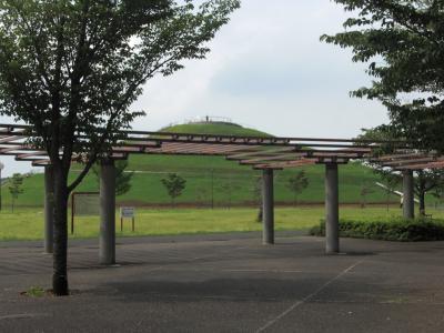 道路側から見たコスモスの丘