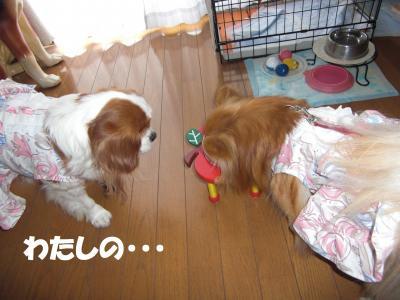 012繝シ繧ウ繝。繝ウ繝・convert_20100214194109
