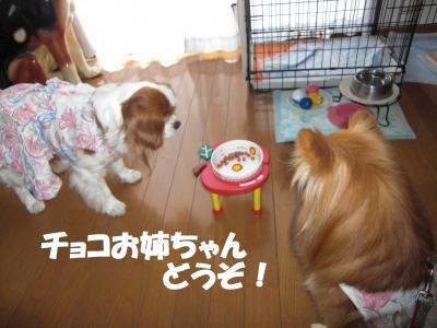 013繝シ繧ウ繝。繝ウ繝・convert_20100214194136