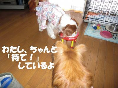 015繝シ繧ウ繝。繝ウ繝・_convert_20100214194251