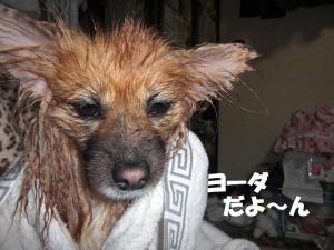 039繝シ繧ウ繝。繝ウ繝・convert_20100301213056