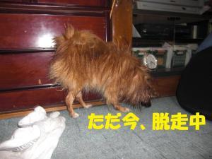 043繝シ繧ウ繝。繝ウ繝・convert_20100302163709