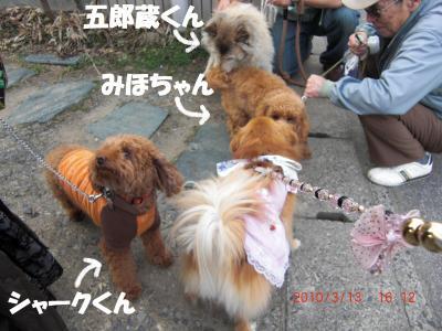 008繝シ繧ウ繝。繝ウ繝・convert_20100316091724