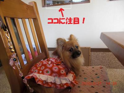 017繝シ繧ウ繝。繝ウ繝・convert_20100318074310