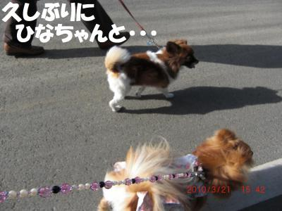 005-繧ウ繝。繝ウ繝・convert_20100323080125