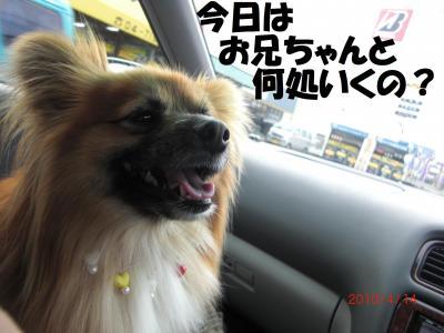 001繝シ繧ウ繝。繝ウ繝・convert_20100415084148