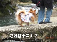 020繝シ繧ウ繝。繝ウ繝・convert_20100415092429