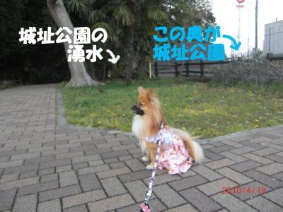032繝シ繧ウ繝。繝ウ繝・convert_20100420142429