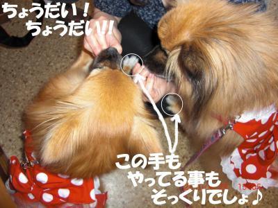 039繝シ繧ウ繝。繝ウ繝・_convert_20100501203926