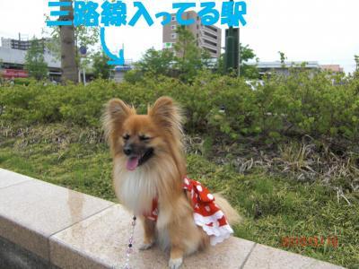 004繝シ繧ウ繝。繝ウ繝・convert_20100512220034