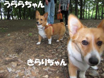 010繝シ繧ウ繝。繝ウ繝・convert_20100530221848