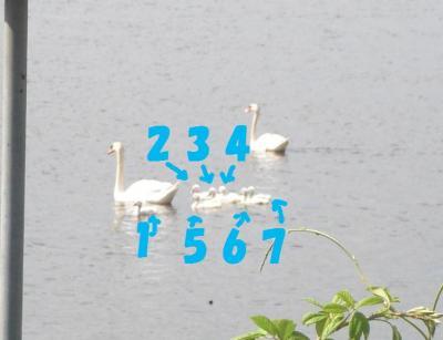 052-繧ウ繝斐・繧ウ繝。繝ウ繝・convert_20100602103825