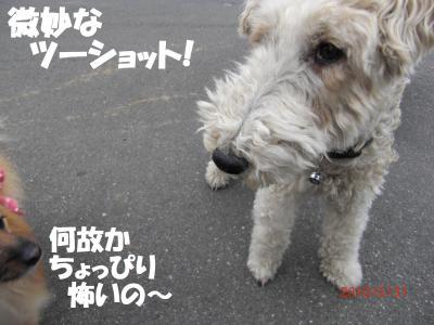014繝シ繧ウ繝。繝ウ繝・convert_20100602113902