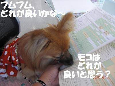 019繝シ繧ウ繝。繝ウ繝・convert_20100602115541