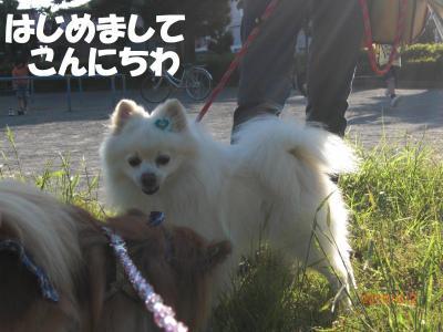 048繝シ繧ウ繝。繝ウ繝・convert_20100604211147