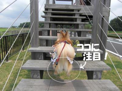 011繝シ繧ウ繝。繝ウ繝・convert_20100614160329