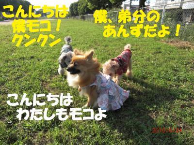 019繝シ繧ウ繝。繝ウ繝・convert_20100626224824