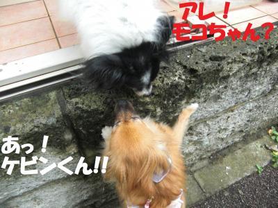 010繝シ繧ウ繝。繝ウ繝・convert_20100714085508