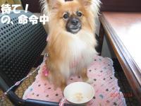 033繝シ繧ウ繝。繝ウ繝・convert_20100715210521