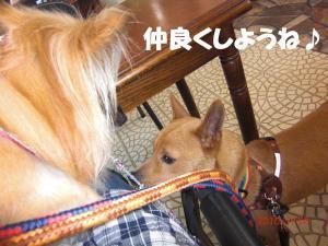 037繝シ繧ウ繝。繝ウ繝・convert_20100715210645