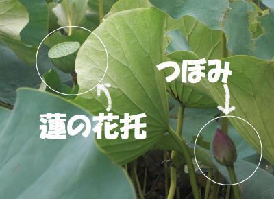 021繝シ繧ウ繝斐・繧ウ繝。繝ウ繝・convert_20100813212814