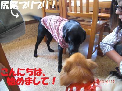 022繝シ繧ウ繝。繝ウ繝・convert_20100922083721