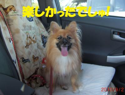 111繝シ繧ウ繝斐・繧ウ繝。繝ウ繝・convert_20100922223009