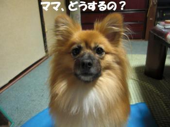 073繝シ繧ウ繝。繝ウ繝・convert_20101023224126