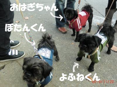 002繝シ繧ウ繝。繝ウ繝井ソョ豁」_convert_20101125214319