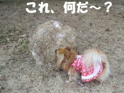 006繝シ繧ウ繝斐・繧ウ繝。繝ウ繝・convert_20110216223605