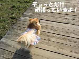 014繝シ繧ウ繝。繝ウ繝・convert_20110304085024