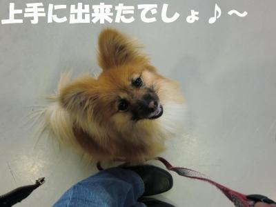 019繝シ繧ウ繝。繝ウ繝・convert_20110406084303