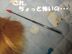 013繝シ繧ウ繝。繝ウ繝・convert_20110406084331