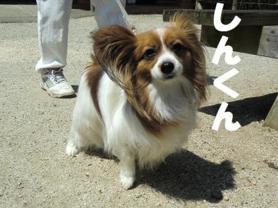 035繝シ繧ウ繝斐・繧ウ繝。繝ウ繝・convert_20110415154517