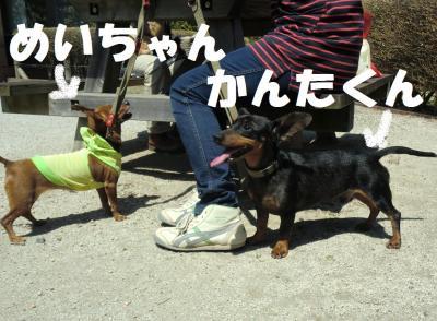 031繝シ繧ウ繝斐・蜷榊燕_convert_20110420092011