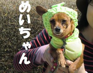 039繝シ繧ウ繝斐・蜷榊燕_convert_20110422145935