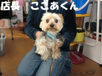 046-繧ウ繝。繝ウ繝・convert_20110427085529