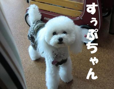 048繝シ繧ウ繝斐・繧ウ繝。繝ウ繝・convert_20110427085617