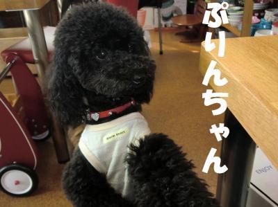 049繝シ繧ウ繝。繝ウ繝・convert_20110427085639