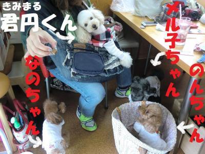 055繝シ繧ウ繝。繝ウ繝・convert_20110427085743