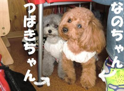 056繝シ繧ウ繝斐・繧ウ繝。繝ウ繝・convert_20110427085817
