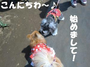 030繝シ繧ウ繝。繝ウ繝・convert_20110428222748