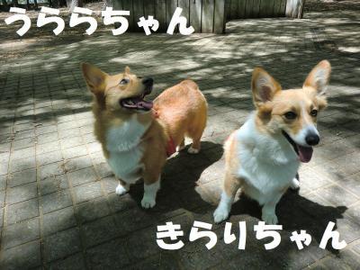 035繝シ蜷榊燕_convert_20110428233141