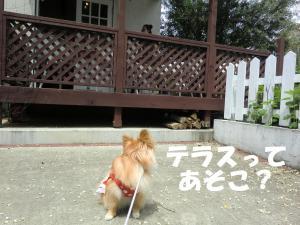 010繝シ繧ウ繝。繝ウ繝・convert_20110516204633