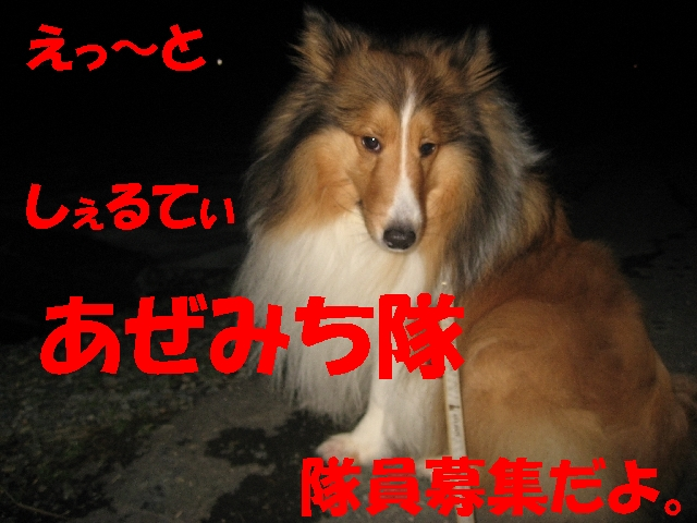 IMG_4867_1_1.jpg