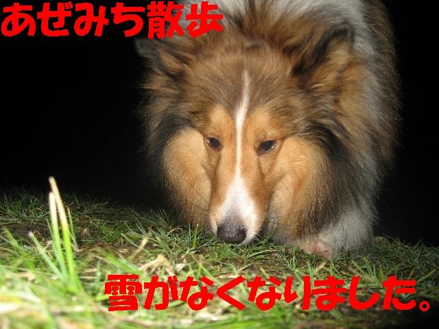 IMG_4884_1_1.jpg