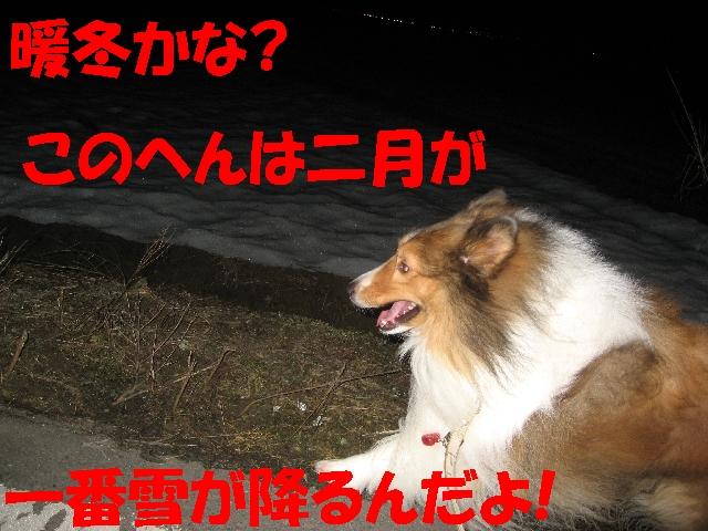 IMG_4892_1_1.jpg