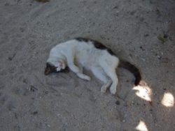 カイジ浜ネコ2