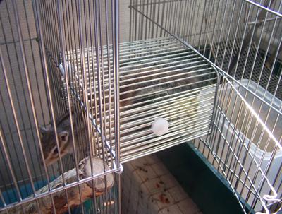 20060531-2.jpg