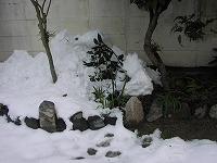 木に落っこちた雪